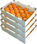 4 Trays - Page Oranges with...