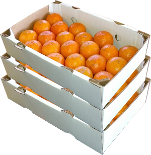 3 Trays - Page Oranges with...