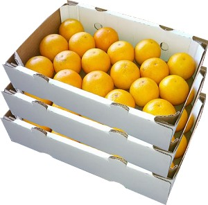 3 Trays - Pineapple Oranges with...